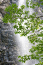 Fresh green leaves tree on waterfall background in the forest Stock Photography