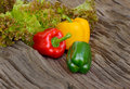 Fresh green lettuce leaves and Red ,Green , yellow bell pepper o Royalty Free Stock Photo