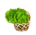 Fresh green lettuce leaves wicker basket isolated white background Stock Images