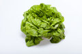 Fresh green lettuce salad isolated on white background Royalty Free Stock Images