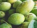 Fresh green mangoes. Royalty Free Stock Photo