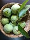 Fresh green moovandan mangoes Royalty Free Stock Photo