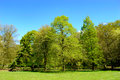 Fresh green new spring foliage on trees Royalty Free Stock Photo