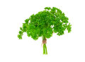 Fresh green parsley Stock Photography