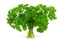 Fresh green parsley Stock Image