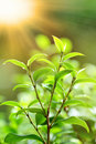 Fresh green plant Stock Images