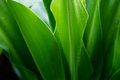 Fresh green plant leaf tropical nature after the rain soft focus Stock Image