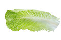 Fresh green Romaine Lettuce, isolated on the white background Royalty Free Stock Photo