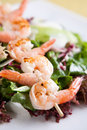 Fresh green salad with grilled shrimps Stock Photos