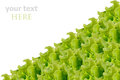 Fresh green salad isolated Royalty Free Stock Photo