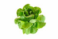 Fresh green salad isolated on white background Royalty Free Stock Photos