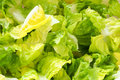 Fresh green salad leaves torn and washed Stock Image