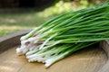 Fresh green shallot Royalty Free Stock Photo