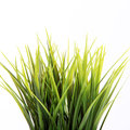 Fresh green spring grass Royalty Free Stock Image