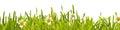 Fresh green spring grass and daisy border
