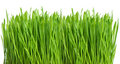 Fresh green spring grass with water drops Stock Photos