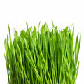 Fresh green spring grass with water drops over white background Stock Image