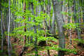 Fresh green spring leaves growing in a forest Royalty Free Stock Photo