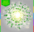 Fresh Green Spring Vector Spla...