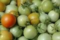Fresh green tomato Royalty Free Stock Photo