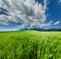 Fresh Green Wheat Field Under Scenic Dramatic Sky