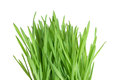 Fresh green wheatgrass closeup of on white background Royalty Free Stock Photo