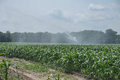 Fresh growing white corn being watered by water powered tractors Royalty Free Stock Photo