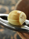 Fresh hazelnut on nutcrakers Stock Photos