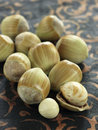 Fresh hazelnuts Stock Photography