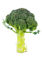 Fresh head uncooked green broccoli standing upright its stalk white studio background Stock Images
