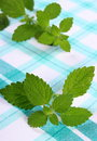 Fresh healthy lemon balm on checkered tablecloth herbalism green sedative herbs concept for nutrition and Royalty Free Stock Image