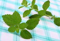 Fresh healthy lemon balm on checkered tablecloth herbalism green sedative herbs concept for nutrition and Stock Image