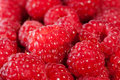 Fresh and healthy summer raspberries. Royalty Free Stock Image