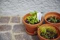 Fresh herbage in pots grown the garden Stock Photo