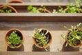 Fresh herbage in pots grown the garden Stock Photos