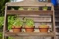 Fresh herbage in pots grown the garden Stock Images