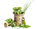 Fresh herbs with antique mortar Stock Photos