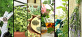 Fresh herbs on balcony garden banners of Stock Image