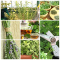 Fresh herbs on balcony garden collage of Royalty Free Stock Images