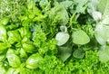 Fresh herbs basil, marjoram, parsley, rosemary, thyme, sage Royalty Free Stock Photo