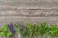 Fresh herbs Basil rosemary sage thyme mint dill savory lavender