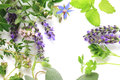 Fresh herbs border Royalty Free Stock Photo