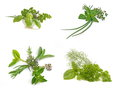 Fresh herbs colletion Stock Photo