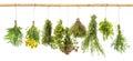 Fresh herbs dill, basil, rosemary, thyme, oregano, marjoram, dan Royalty Free Stock Photo