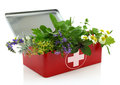 Fresh herbs in first aid kit on white background Royalty Free Stock Image