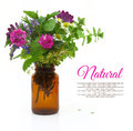 Fresh herbs and flowers in a medical bottle on white background Royalty Free Stock Images