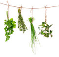 Fresh herbs hanging isolated on white background Royalty Free Stock Photo