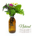 Fresh herbs in a medical bottle Royalty Free Stock Photo