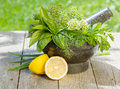 Fresh herbs in mortar on garden table Stock Photos