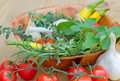 Fresh herbs and organic vegetables Stock Images